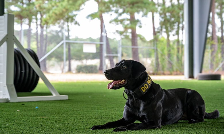 A photo of a military working dog.