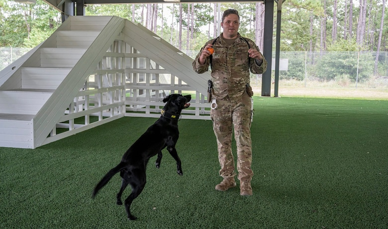 A picture of an Airman and a military working dog.