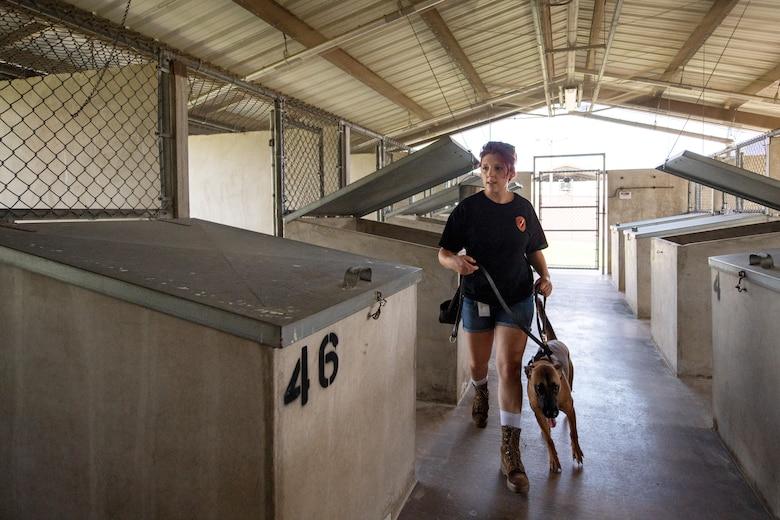 Female civilian walks dog.