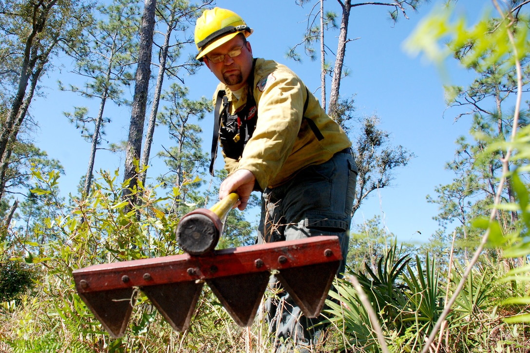 biological science technician, clears out fuel at the base of a longleaf pine tree
