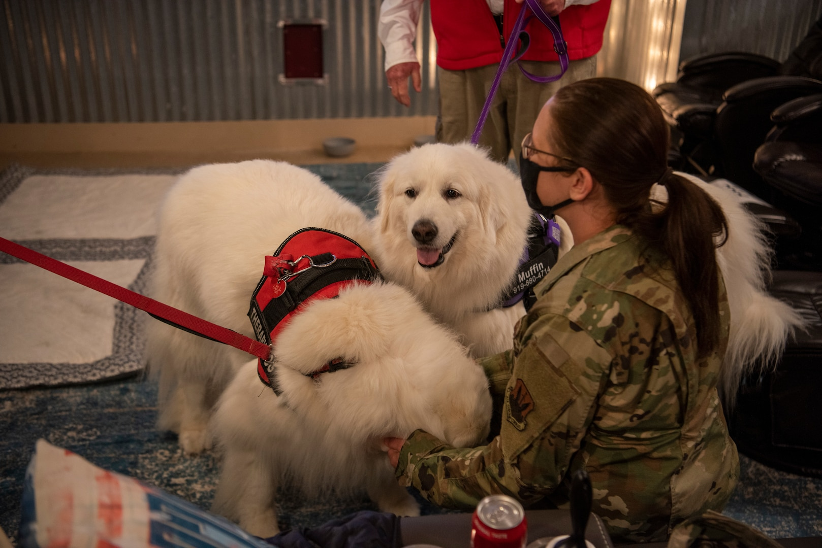 Airman 1st Class Kimberley Barrera, 4th Fighter Wing public affairs specialist, pets therapeutic dogs at the USO of North Carolina reopening at Seymour Johnson Air Force Base, North Carolina, April 01, 2021.
