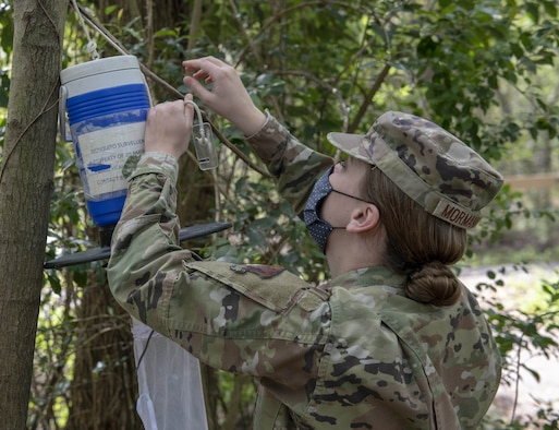 Airman hangs trap on tree.
