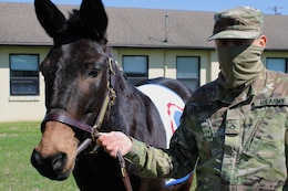mule mascot with soldier