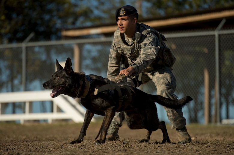 Staff Sgt. Mark Devine, a military working dog handler from the 802nd Security Forces Squadron, prepares to release JJany during a controlled aggression exercise at Joint Base San Antonio-Lackland. Devine and military working dog handlers assigned to JBSA-Lackland fulfill daily law enforcement requirements or train to remain mission-ready. (U.S. Air force photo/Staff Sgt. Vernon Young Jr.)