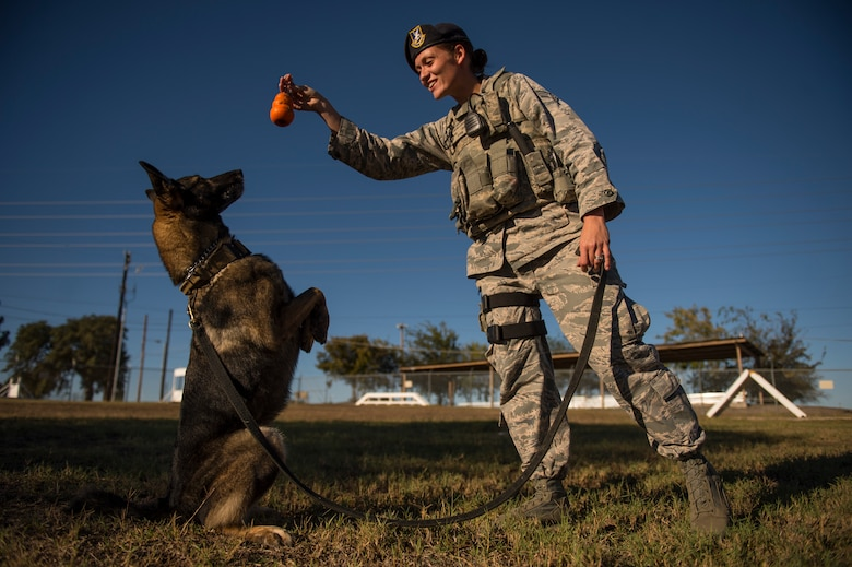 """Senior Airman Chelsea LaFever gestures for ZZusa to """"sit pretty"""" during training at Joint Base San Antonio-Lackland, Texas. Upon completion of training tasks, LaFever, a military working dog handler,  encourages ZZusa with a treat. LaFever and ZZusa have been training and developing chemistry to complete the day-to-day mission at JBSA-Lackland. (U.S. Air force photo/Staff Sgt. Vernon Young Jr.)"""