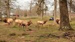 Maintenance supervisor drives wildlife biologist around the elk pastures on Defense Supply Center Richmond, Virginia