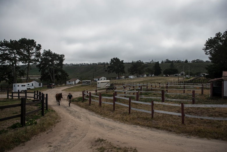 After finishing training for the day Reserve Staff Sgt. Lauren Daniels and Trooper, a military horse, walk back to the stables at the Vandenberg Saddle Club near Vandenberg Air Force Base, California. (U.S. Air Force photo/Staff Sgt. Andrew Lee)