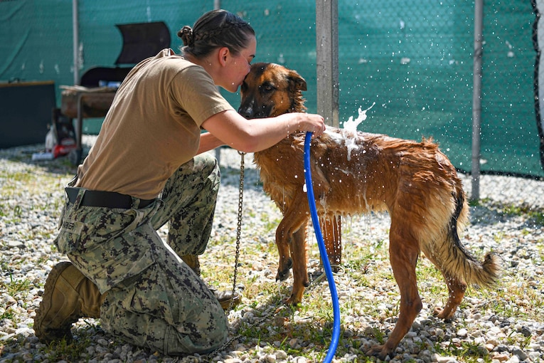 A sailor kneels on the ground while pouring water onto dog with a water hose.