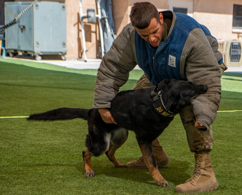 Dog bites Airman in training exercise.