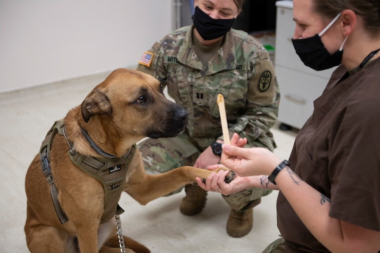 Two female U.S. Army veterinarians examining a large dog