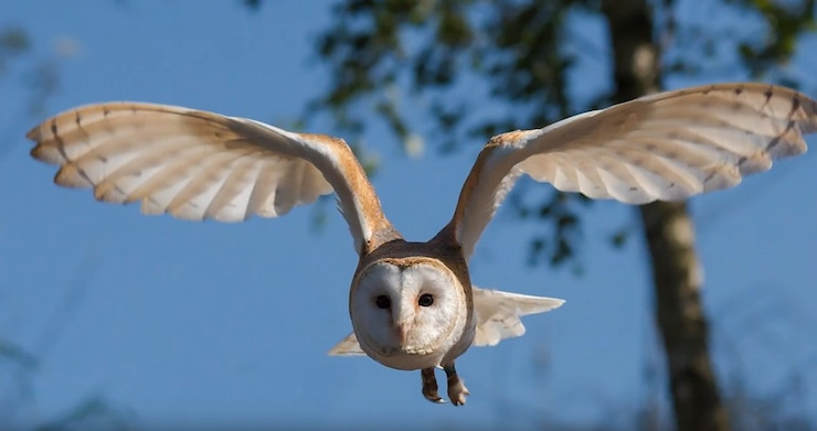 This is an environmental video series to help educate about natural resources in the training area, featuring Owls.