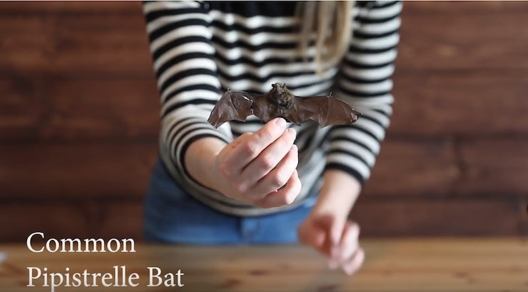 This is an environmental video series to help educate about natural resources in the training area, featuring Bats.
