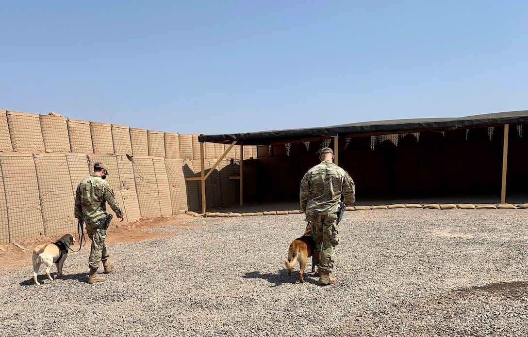 U.S. Air Force Staff Sergeants Dakota Farrow and Patrick Saddoris, 726th Expeditionary Air Base squadron military working dog handlers, walk with their K-9, MWDs Max and Benny at Camp Chabelley, Djibouti, April 15, 2021. Some of the practices that the working dogs at Chabelley conduct include vehicle searches, building searches, open area searches, and scent detection. (Courtesy photo by Maj. Tim O'Rouke)