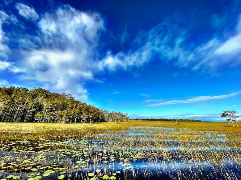 Photo of Everglades Landscape in Water Conservation Area 3A