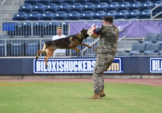 """U.S. Air Force Staff Sgt. Cody Garton, 81st Security Forces Squadron military working dog handler, and Rico, 81st SFS military working dog, participate in a demonstration at the MGM Park during a Biloxi Shuckers Minor League Baseball team pre-game festivities in Biloxi, Mississippi, Aug. 1, 2021. The """"Bark in the Park"""" themed baseball game invited fans to attend the game with their dogs. (U.S. Air Force photo by Kemberly Groue)"""
