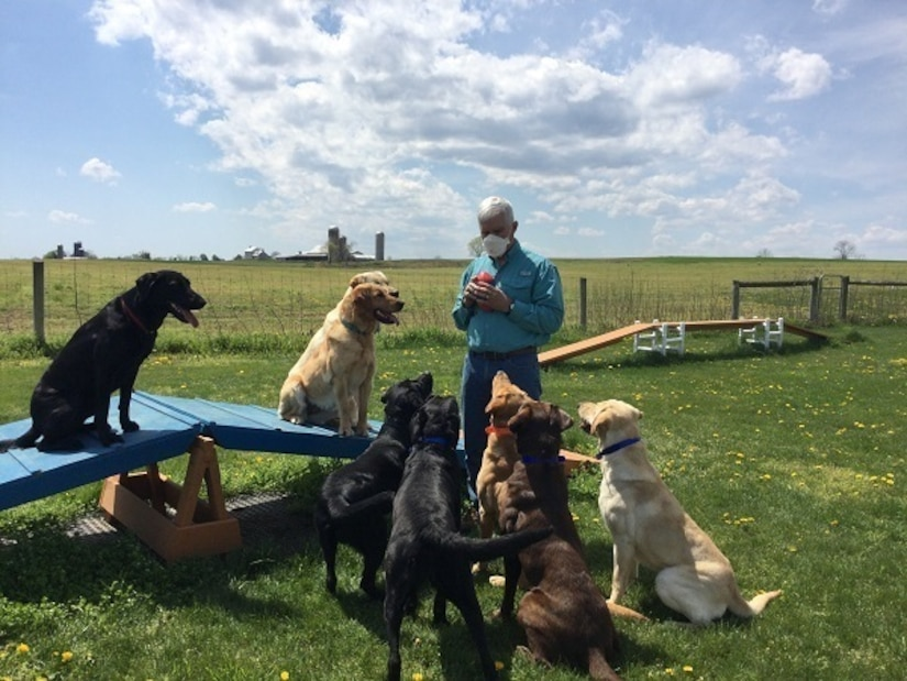 In a large field, eight dogs watch a man who holds a device in his hand.