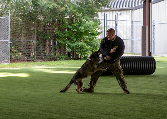 Military working dog Gina, performs her last bite on Staff Sgt. Steven Matias, 4th Security Forces Squadron MWD handler, during Gina's retirement ceremony at Seymour Johnson Air Force Base, North Carolina, Aug. 26, 2021.