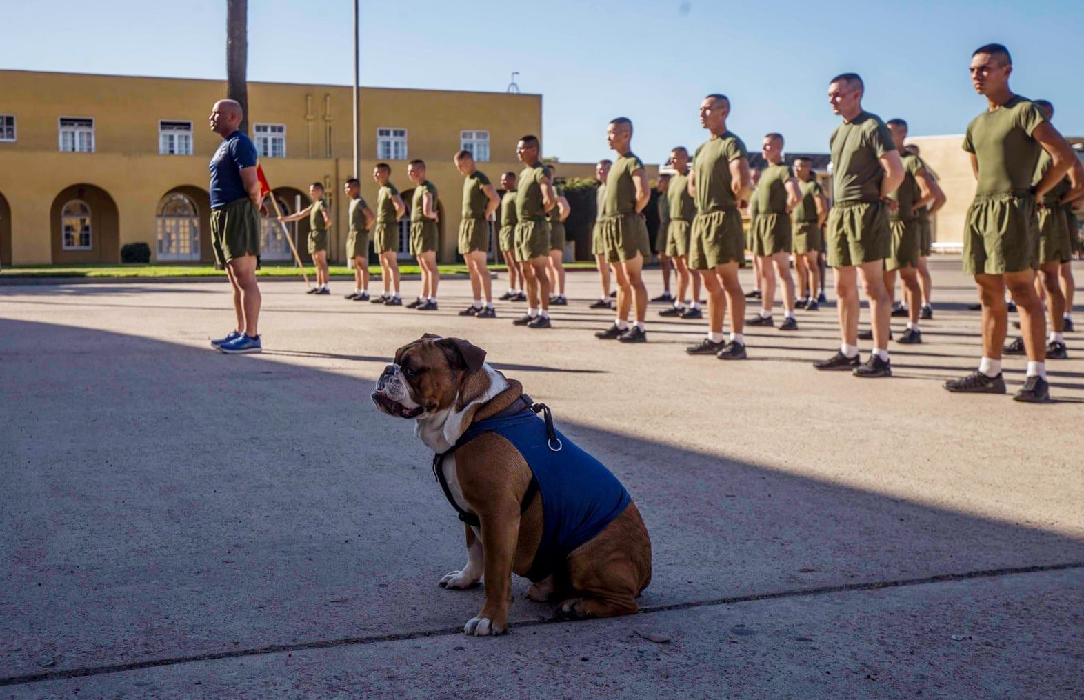Lance Cpl. Manny, the Marine Corps Recruit Depot (MCRD), San Diego mascot participates in Lima Company's motivational run at MCRD, Jan. 21, 2020.