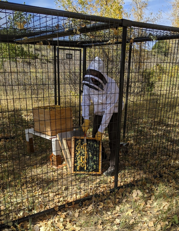 Kyle Sisco, natural resources specialist, outfitted in his beekeeper suit, opens the top of the hive, and takes out one of the frames from the bee hive.