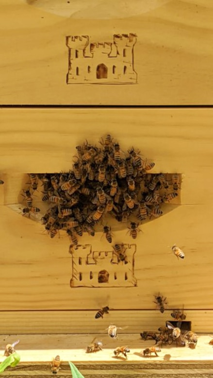 The bees have adjusted to their new, handmade hives at Trinidad Lake and Dam. According to the Natural Resources Management Gateway reference website, any hives and bees on federal property can only be utilized for pollination. The honey produced is strictly for the bees to consume to keep the hive going.
