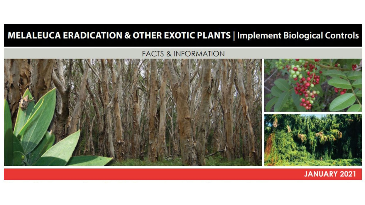 Image of Melaleuca Eradication & Other Exotic Plants - Implement Biological Controls Fact Sheet