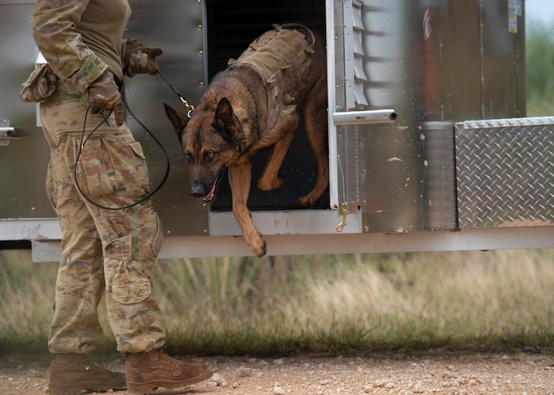 LACW Christina Smith, 2 Security Forces Squadron Tindal, Australia, military working dog handler, takes her dog out of his kennel during Pacific Defender 21-1 at Andersen Air Force Base, Guam, January 27 2021.