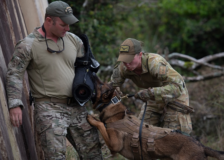 LACW Christina Smith, 2 Security Forces Squadron Tindal, Australia, military working dog handler, attaches a short leash to her dog, Chainsaw, before commanding him to release his bite on a simulated suspect during Pacific Defender 21-1 at Andersen Air Force Base, Guam, January 27 2021