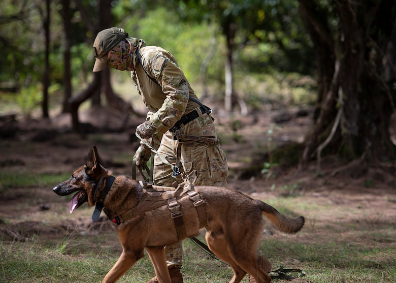 LACW Christina Smith, 2 Security Forces Squadron Tindal, Australia, military working dog handler, follows a scent with her dog during Pacific Defender 21-1 at Andersen Air Force Base, Guam, January 27 2021.