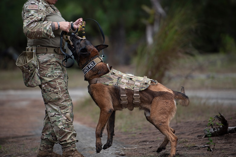 SrA Alexandra Campanaro, 36th Security Forces Squadron military working dog handler, rewards her dog, Harry, during Pacific Defender 21-1 at Andersen Air Force Base, Guam, January 27 2021