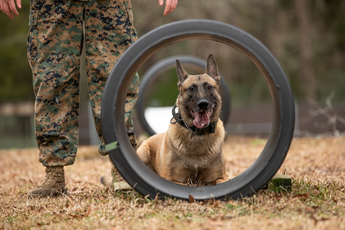 The life of a U.S. Marine Corps military working dog handler is just like that of any Marine. It's full of training, learning how to better serve those around them and working to ensure the mission is accomplished.