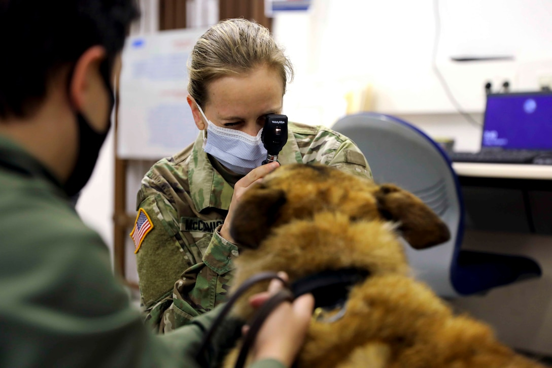 A soldier looks at the eye of a dog using a medical instrument.