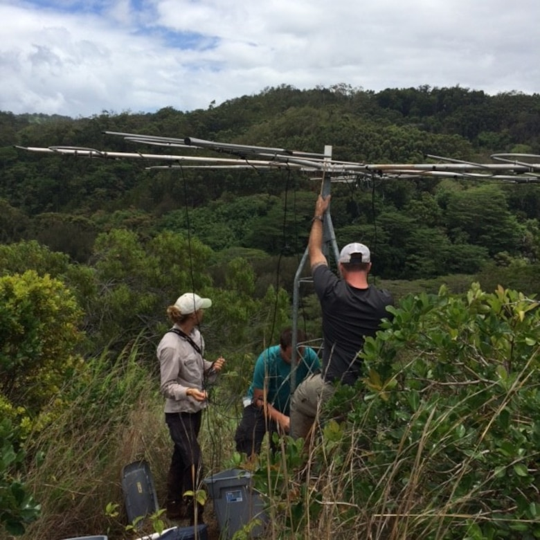 Collaborators of U.S. Army Engineer Research and Development Center, Construction Engineering Research Laboratory (CERL), including Dr. Jinelle Sperry, wildlife biologist at the CERL's Threatened and Endangered Species Program, install towers for automated radio-telemetry of fruit-eating birds in Oahu, Hawaii, July 24, 2015. This research demonstrates the importance of certain non-native species as dispersers of native, endangered plants on Hawaii military installations. (U.S. Army Corps of Engineers photo)
