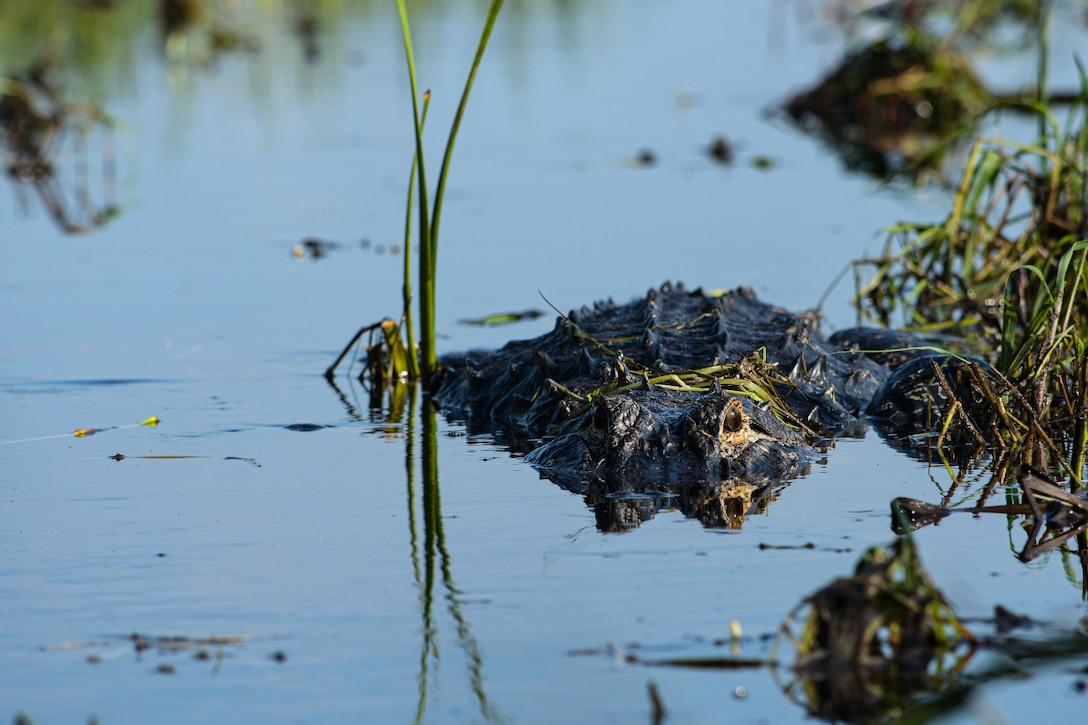 Comprehensive Everglades Restoration Plan (CERP) proje