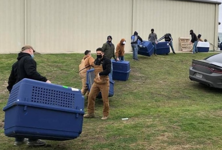 To protect the military working dogs at Joint Base San Antonio during the extreme weather this week, members of the 341st Military Working Dog Training Squadron came together with their mission partners, active-duty military members, students and civilians, to move the dogs from their outdoor kennel runs into warm buildings in the squadron's training area.