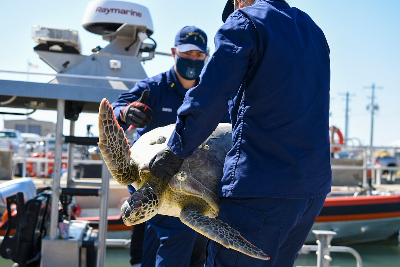 Two Coast Guardsmen hold a large turtle at a pier.