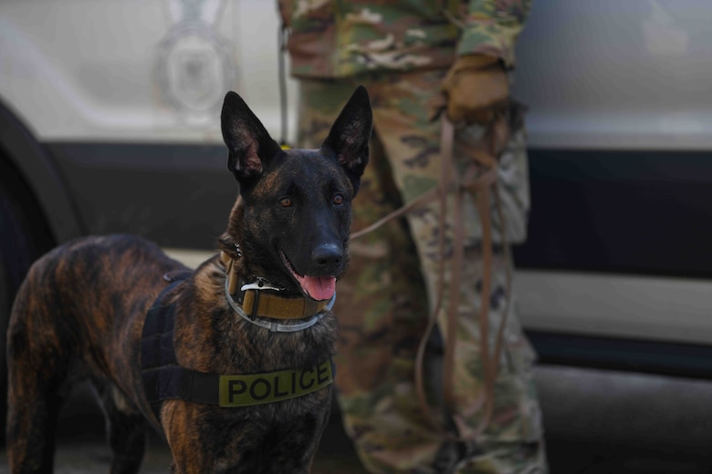 Rryker, 31st Security Forces Squadron military working dog, stands with his MWD handler at Aviano Air Base, Italy, Jan. 4, 2021. MWDs provide security, crime prevention patrols, emergency response, and intruder detection. MWD handlers practice basic obedience with their dogs often as part of the MWD's foundation. (U.S. Air Force photo by Senior Airman Ericka A. Woolever)