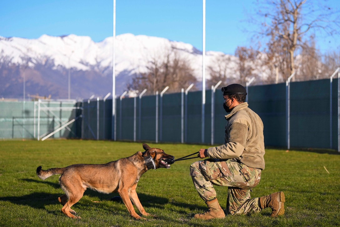 An airman trains a military working dog.