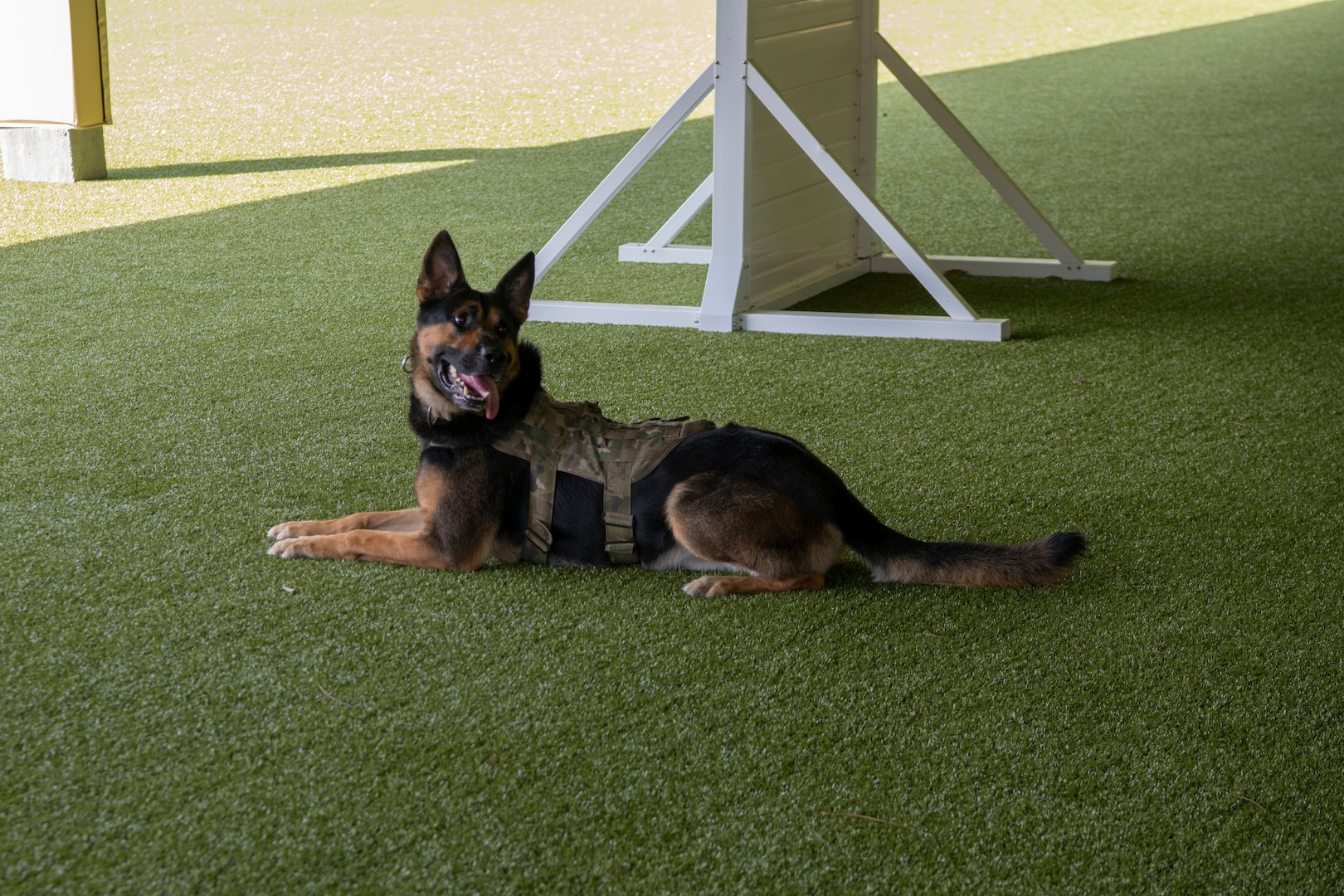 Nelson, a military working dog at the 1st Special Operations Security Forces Squadron, Hurlburt Field, Florida.