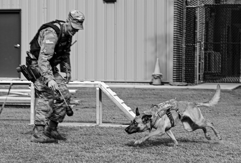 U.S. Army Specialist Taylor Blanton, 3rd Military Police Detachment, Military Working Dog handler, and Military Working Dog Maya, play together after training at Joint Base Langley-Eustis, Virginia, July 8, 2021. Throughout the week, the team trains together at least 4-5 days to ensure they have the skills and bond to effectively handle any situation they may respond to for assistance. (U.S. Air Force photo by Senior Airman Sarah Dowe)