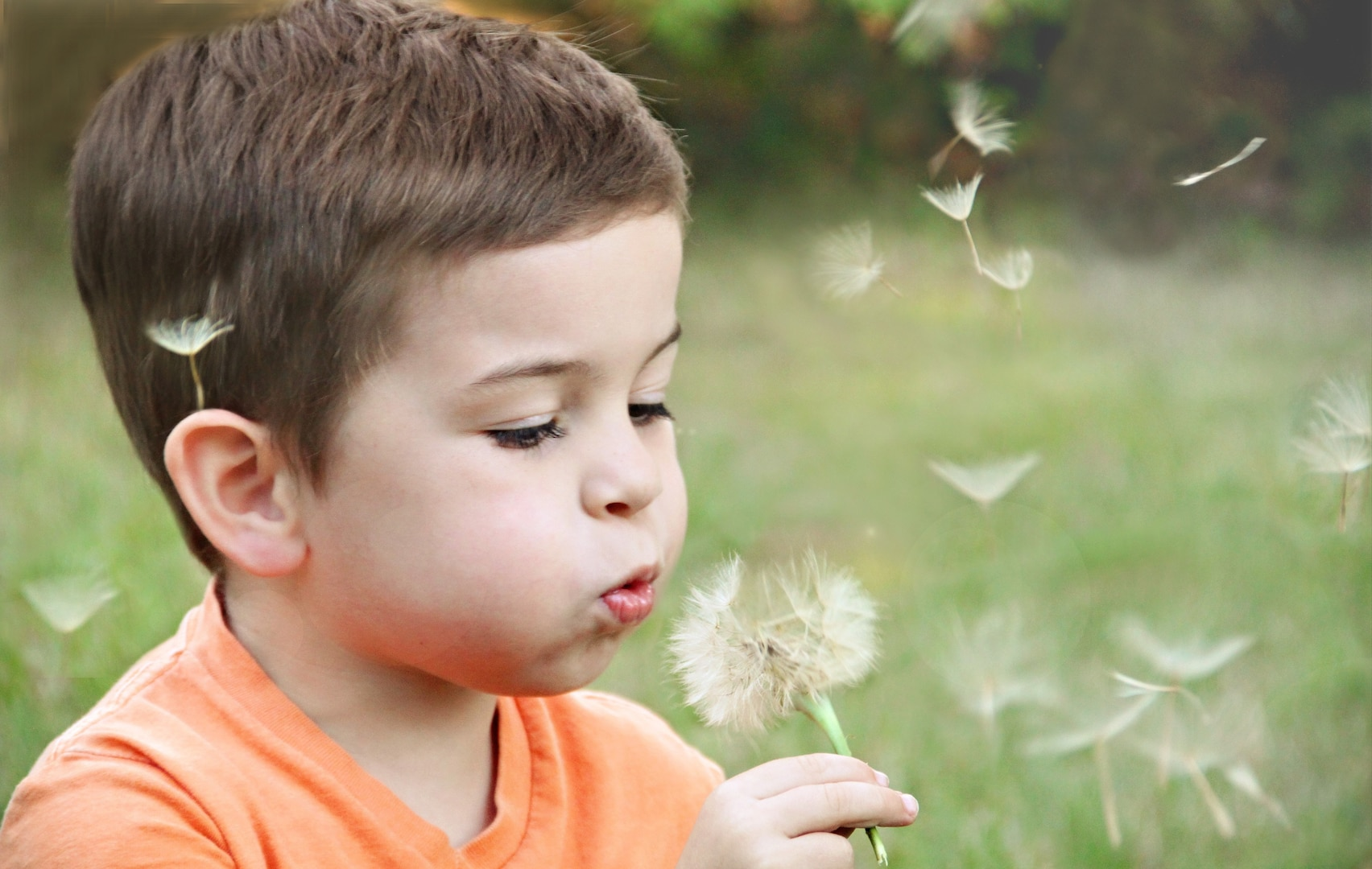 Young boy with dandelion