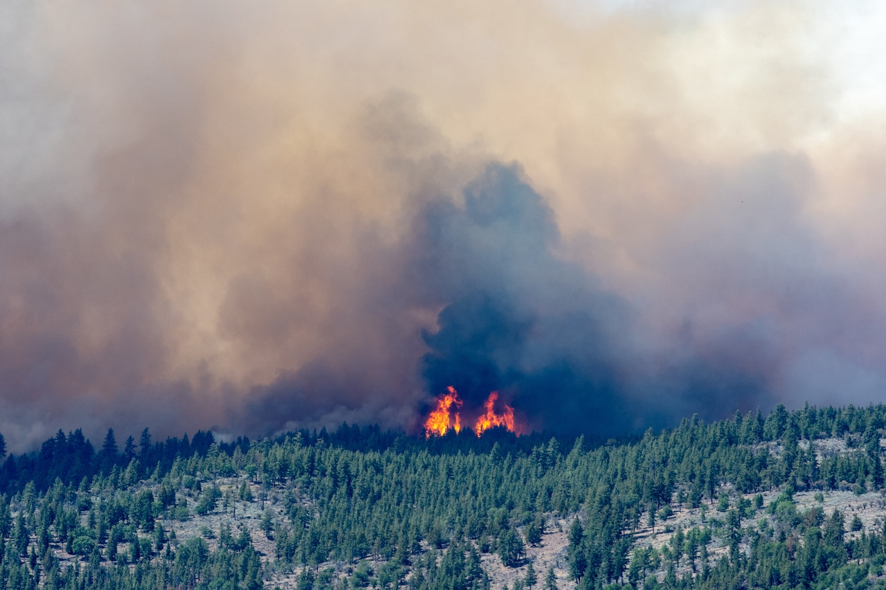 Flames appear on a hillside dotted with trees.