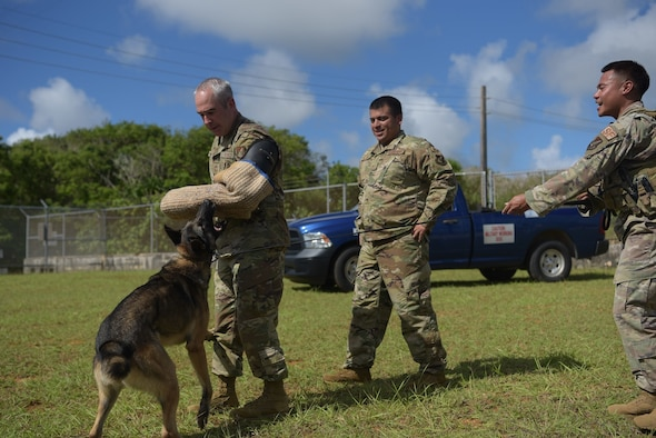 U.S. Air Force Chief Master Sgt. Kristopher Berg, 11th Air Force Command Chief, wears a protective arm sleeve and is bitten by a military working dog from the 36th Security Forces Squadron as part of a demonstration, June 8, 2021, at Andersen Air Force Base, Guam.