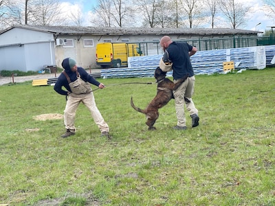 Dog attacks man in protective gear