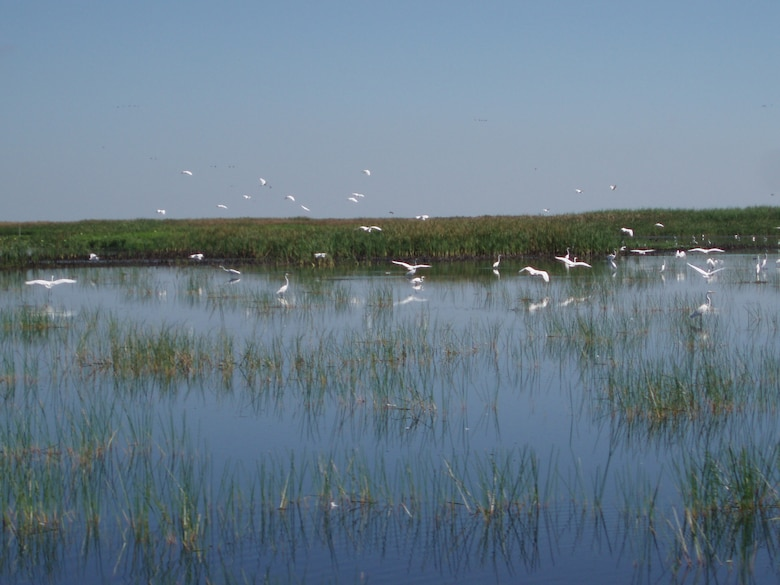 Photo of wading birds on Lake Okeechobee