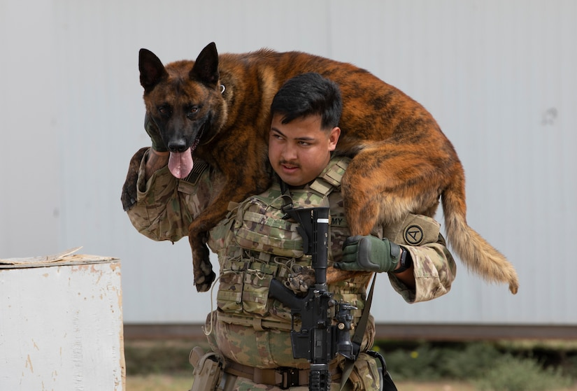 U.S Army Spc. Ignacio Torres, a military working dog handler with Area Support Group-Kuwait Directorate of Emergency Services Canine, carries his military working dog during a canine explosive ordnance detection course at Camp Buehring, Kuwait, Mar. 4, 2021. Military working dog handlers are paired with a single military working dog, allowing each handler to get to know the ins and outs of their dog to ensure maximum efficiency in the field. (U.S. Army photo by Spc. Maximilian Huth, ARCENT Public Affairs)