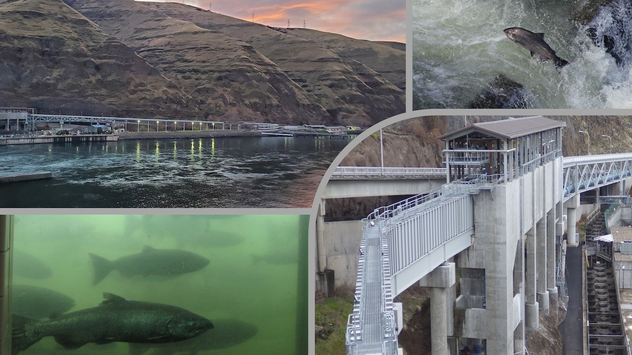 The Corps of Engineers recognizes that fish have significant cultural, natural, economical and recreational importance to our Nation.  Many dams have fish ladders and juvenile bypass systems already installed, and investments are continuing to be made to improve fish passage.  The bypass system at Lower Granite Dam (above) is similar to systems at many other Corps dams.  The juvenile salmon and steelhead collected by these systems are loaded on to barges and transported down the Snake and Columbia Rivers to the Pacific Ocean.