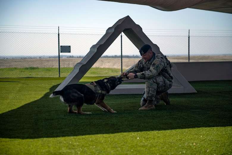 Staff Sgt. Jason Herrier, 9th Security Forces Squadron (SFS) military working dog (MWD) handler and Bady 2, 9th SFS MWD play together on Beale Air Force Base.