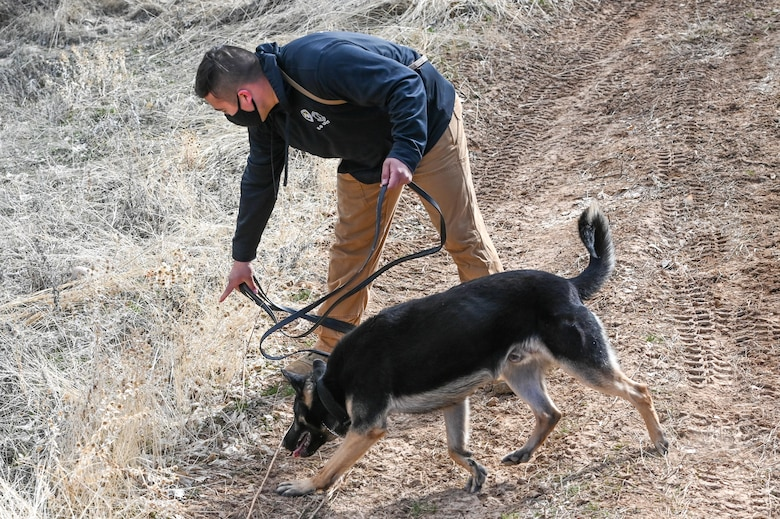 Staff Sgt. Juan Reyes and Military Working Dog Fules, 75th Security Forces Squadron, search for explosive making materials during training March 10, 2021, at Hill Air Force Base, Utah. (U.S. Air Force photo by Cynthia Griggs)