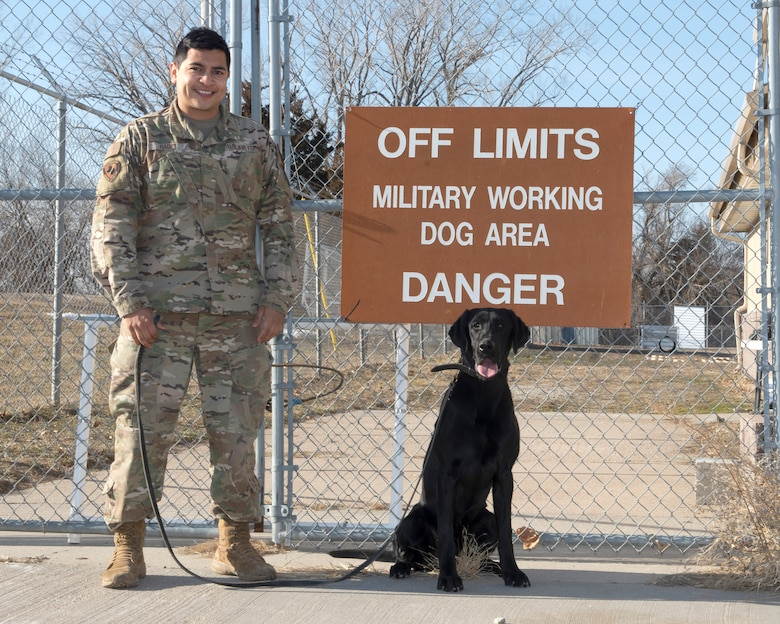 Air Force sergeant standing in front of brown sign on fence that reads off limits military working dog area danger, military working dog, black labrador retriever sits squarely underneath the sign