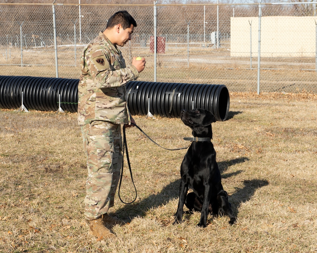 Air Force sergeant standing in front of military working dog holding a ball in his hand to keep the dog's attention